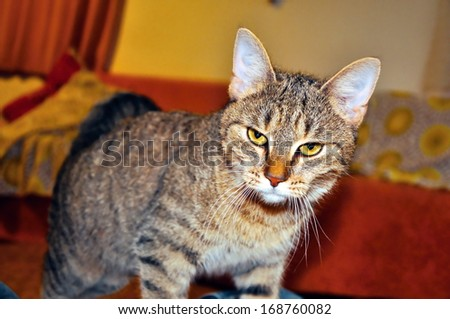 portrait of interested cat in interior of house - stock photo
