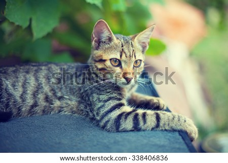 Portrait of kitten outdoors in the garden