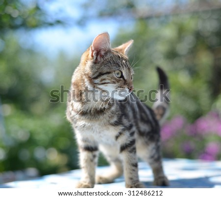 Portrait of leopard print cat in a  nature - stock photo