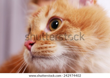 Portrait of lovable red cat, close-up - stock photo