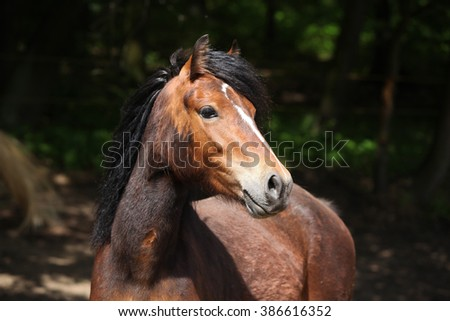 Portrait of lovely brown pony with nice black mane - stock photo