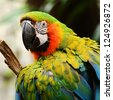 Portrait of  Macaw - stock photo
