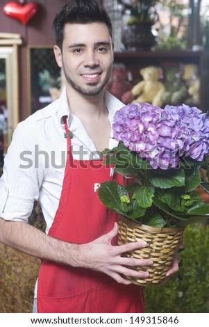 Portrait of male florist holding hydrangea flower plant in shop - stock photo