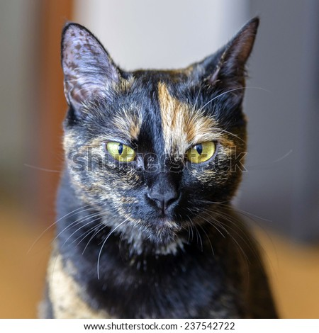 Portrait of nice bicolor cat.  - stock photo