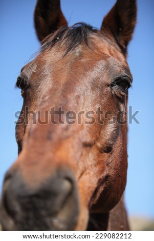 Portrait of nice brown horse  - stock photo