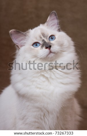 Portrait of nice cat on brown background - stock photo