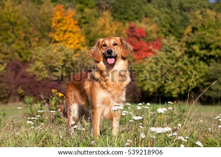 Portrait of nice crossbreed dog