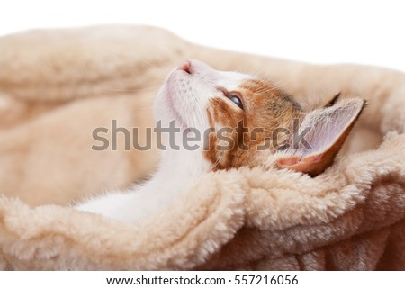 Portrait of nice kitten on isolated background