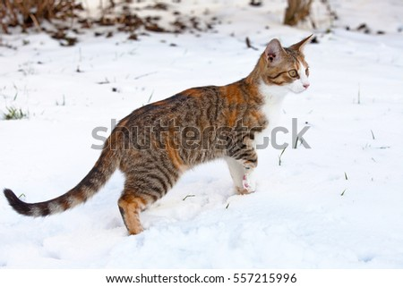 Portrait of  nice kitten on snow