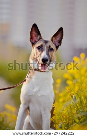 Portrait of not purebred domestic dog in yellow flowers. - stock photo