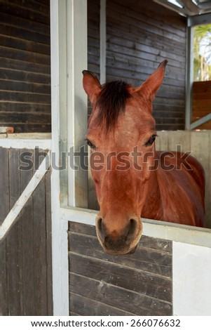 Portrait of one beautiful horse who is stand in a stable - stock photo