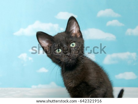 Portrait of one black kitten leaning over looking at viewer curiously. Blue background sky with clouds.