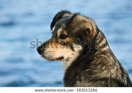 Portrait Of Outbred Dog Against The Background Of The Sea