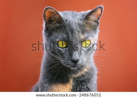 Portrait Of Outbred Domestic Cat - stock photo