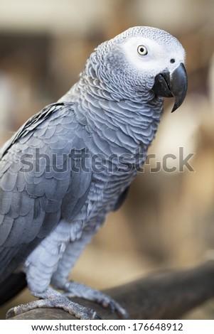 Portrait of parrot  - stock photo