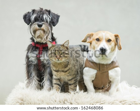 Portrait of pet family on blanket - stock photo