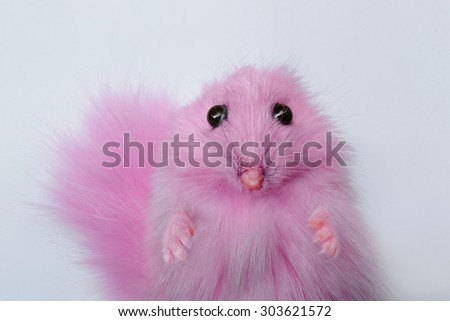 Portrait of pink hamster