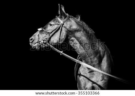 Portrait of posing stallion - stock photo