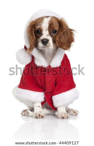 Portrait of puppy Cavalier King Charles Spaniel, 4 months old, dressed in Santa coat in front of white background - stock photo