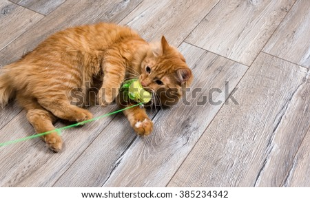 portrait of red cat playing with toy - stock photo