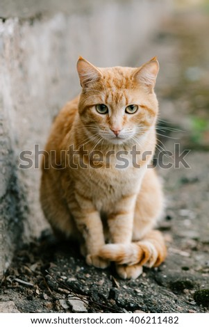 Portrait of red-headed cat looking at camera