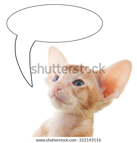 Portrait of red kitten with text balloon isolated over white background - stock photo