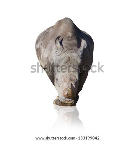 Portrait Of Rhinoceros Isolated On White Background - stock photo