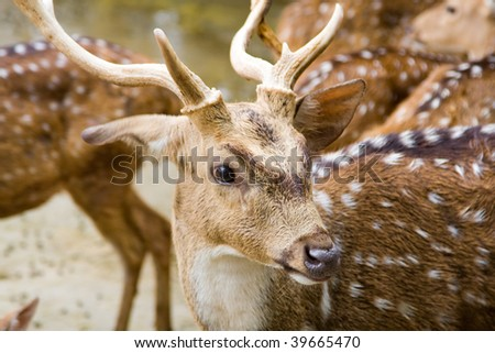 Portrait of roe deer - stock photo
