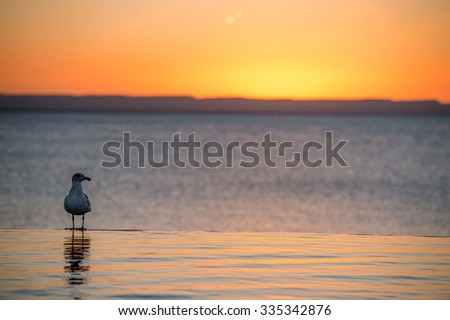 portrait of seagull on sandy beach on golden sunset background - stock photo