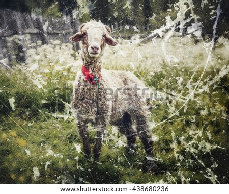 Portrait of sheep in a meadow. - stock photo