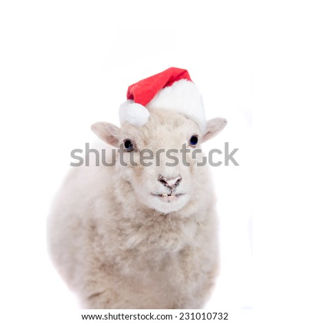 Portrait Of sheep in christmas hat On White - stock photo