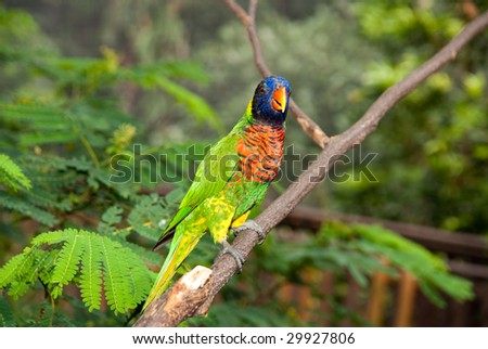 Portrait of single colorful parrot standing on tree branch