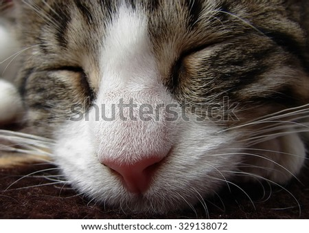 portrait of sleeping young cat