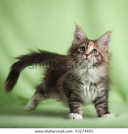 Portrait of sweet pet cat - stock photo