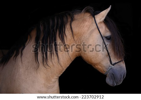 Portrait of the horse on the black background