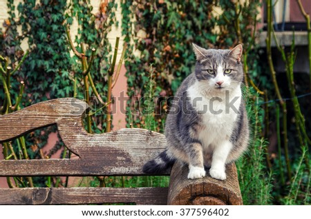 Portrait of the March Cat sitting on a bench close-up. - stock photo