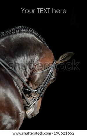 Portrait of the sport horse - stock photo