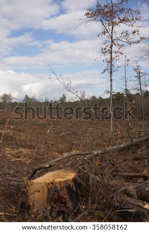 Portrait of tree stump in freshly harvested pine forest, cloudy blue sky - stock photo