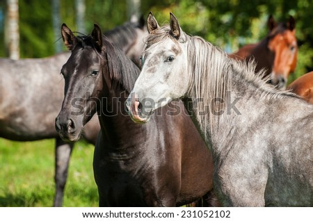 Portrait of two beatiful horses in the herd - stock photo