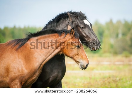 Portrait of two young horses on the pasture - stock photo