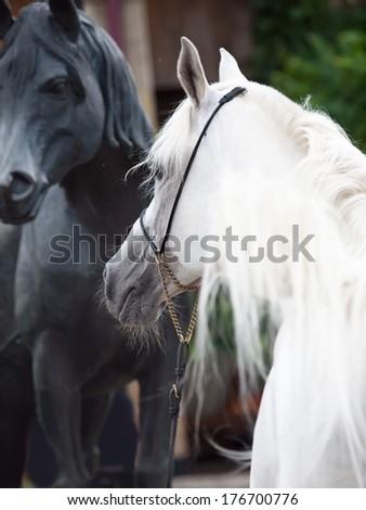 portrait of white arabian stallion with statue of horse - stock photo