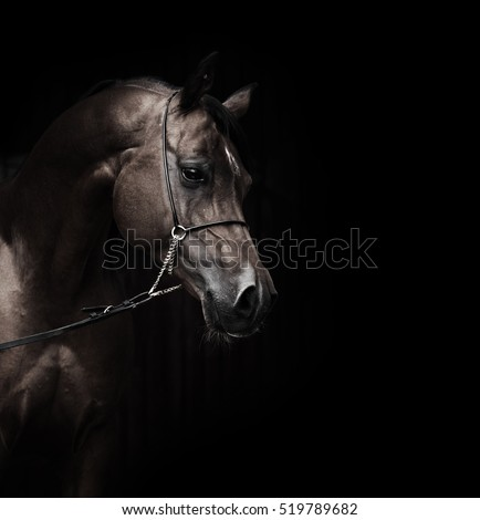 portrait of wonderful bay  arabian horse.