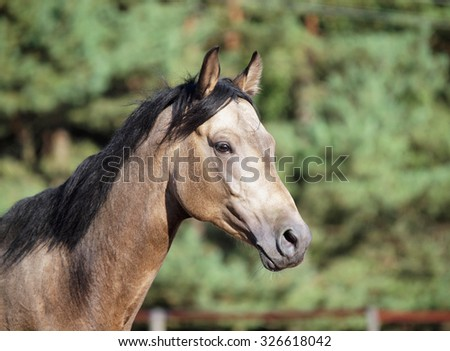 Portrait of young dun horse on a background the forest