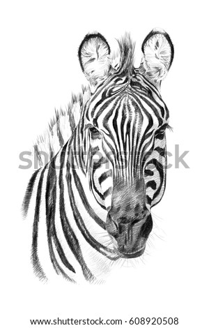 Zebra Face Drawing | www.pixshark.com - Images Galleries ...