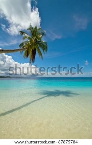 Portrait photo of palm coconut tree on tropical beach, plenty of room for text - stock photo
