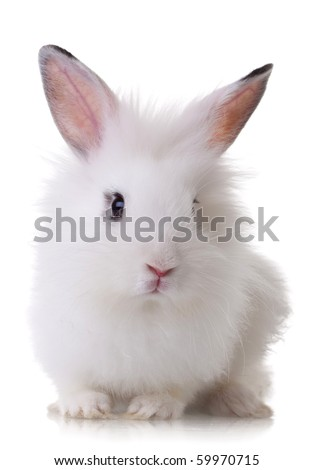 portrait picture of a white little rabbit looking at the camera - stock photo