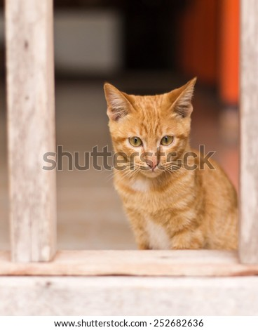 portrait red cat in frame wood
