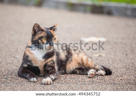 Portrait thai young cat on the ground