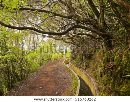 Portugal, Madeira, View of the Levada da Serra do Faial on the part from Ribeiro Frio to Portela.