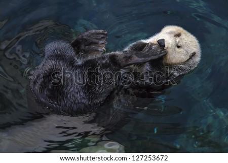 Portugal, sea otter - stock photo